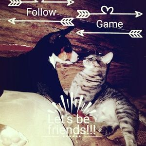 Other - 🐶🐱FOLLOW GAME!!!#2🐱🐶
